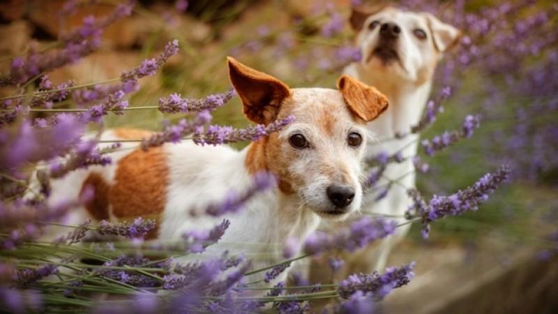 Foto Fitoterapia per Cani: curare i cani con le  erbe