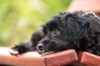 curare cane con le erbe