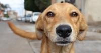 Foto Pillola anticoncezionale per Cani