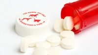 pillola contraccettiva cane