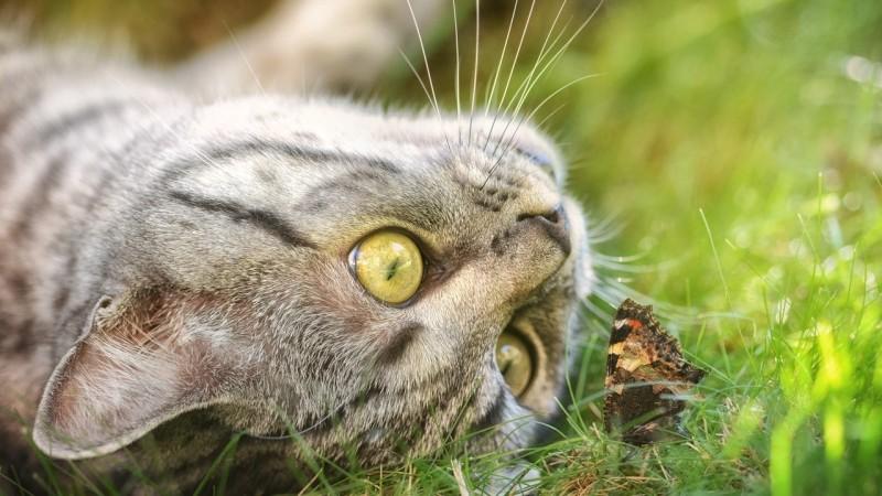 Foto Zecche del Gatto: pericoli e rimozione