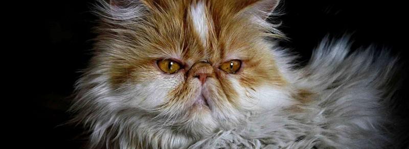 personalità del gatto