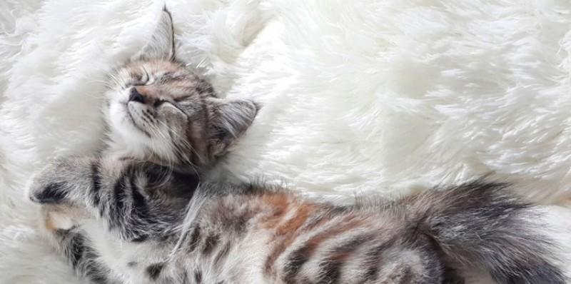 Foto Ritmo biologico del gatto