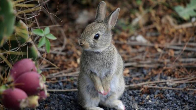 Foto Il Coniglio può vivere fuori?