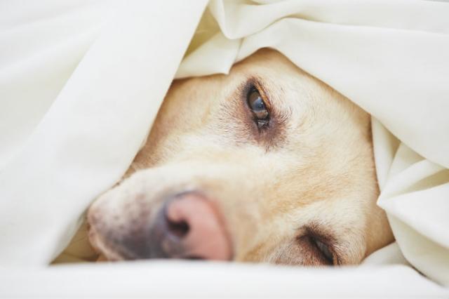 Foto Desametasone - Farmaci per cani e gatti