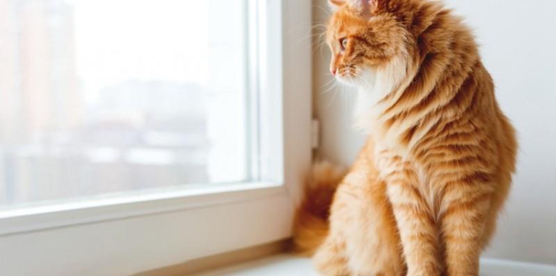gatto porta a casa la sua preda