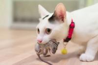 gatto gioca con la sua preda