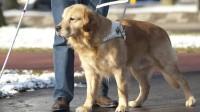 cane guida disabili