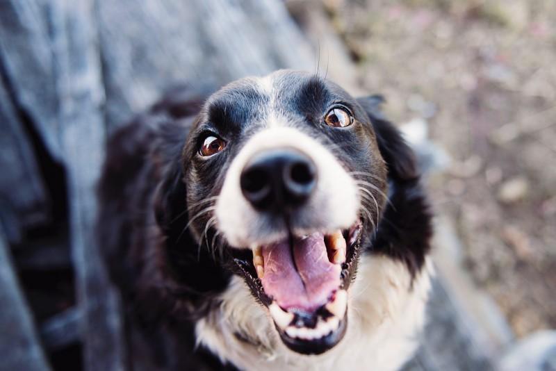 Foto Quali sono le conseguenze della consanguineità nei cani?