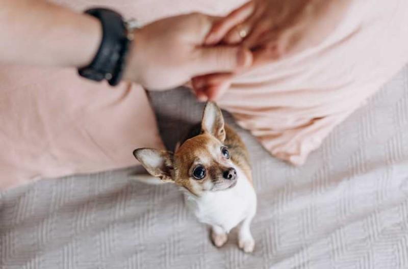Foto Gelosia nei cani: cosa fare?