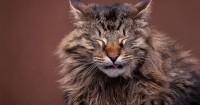 Foto Il mio gatto ha mangiato aglio: cosa fare?