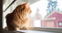 Foto Per quanto tempo posso lasciare il mio gatto a casa da solo?
