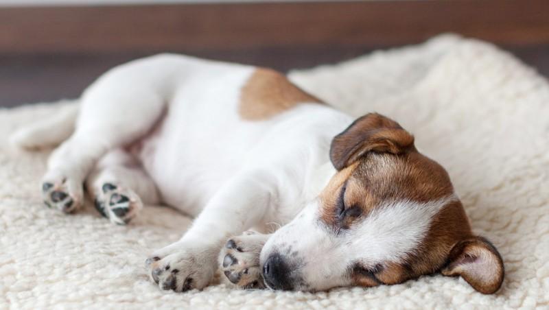 Foto Le migliori abitudini e routine per i cani