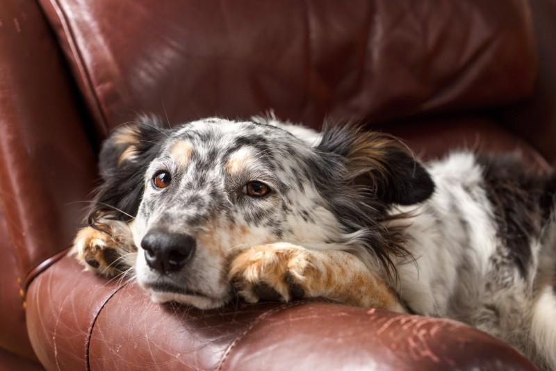 Foto Perché il mio cane sa quando torno a casa?