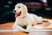 Foto Colore della lingua del cane: normale o problemi?