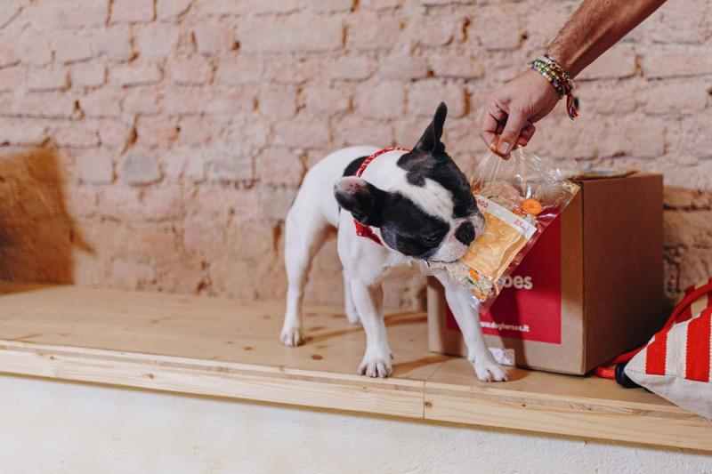 Foto Eccesso o carenza di vitamina A nei cani