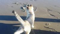 Foto Posso portare il gatto in spiaggia?