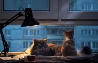 gatti quando piove