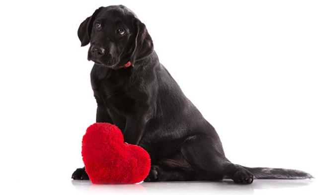 Foto Insufficienza cardiaca nel Cane: sintomi e cure