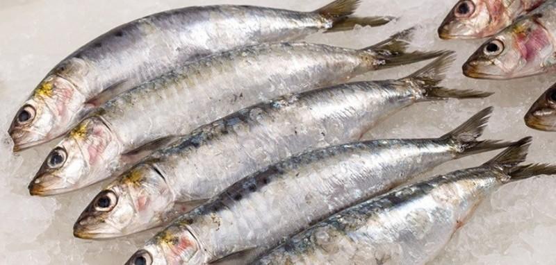 Foto I Gatti possono mangiare sardine?