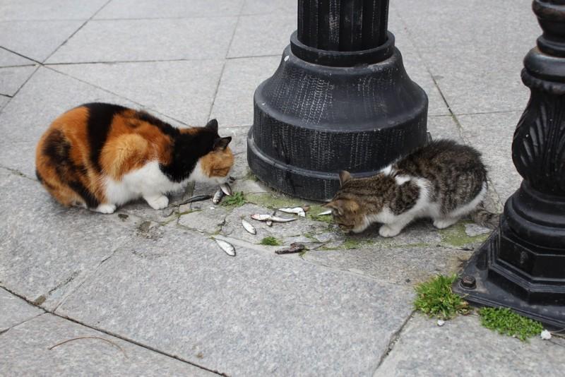 sardine al gatto