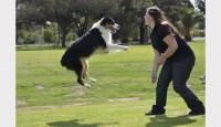 Foto Il mio cane salta quando saluta