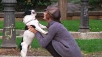 cane salta addosso