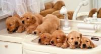 Foto Il primo bagno al Cane