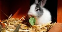 Foto Quali vitamine posso dare al mio coniglio?