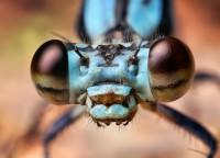 occhi libelllula