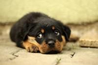 Foto Perché il cane fa la pipì a letto?