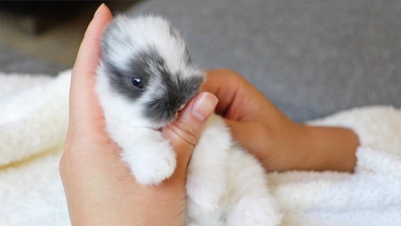 Foto Perché i conigli leccano tutto?