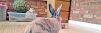 prendersi cura di un coniglio annoiato