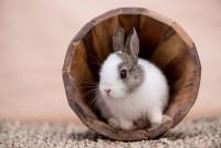 Foto Perché il mio coniglio si nasconde?