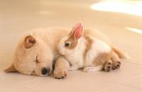 Foto Conigli e cani possono vivere insieme?