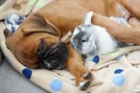 coniglio e cane insieme