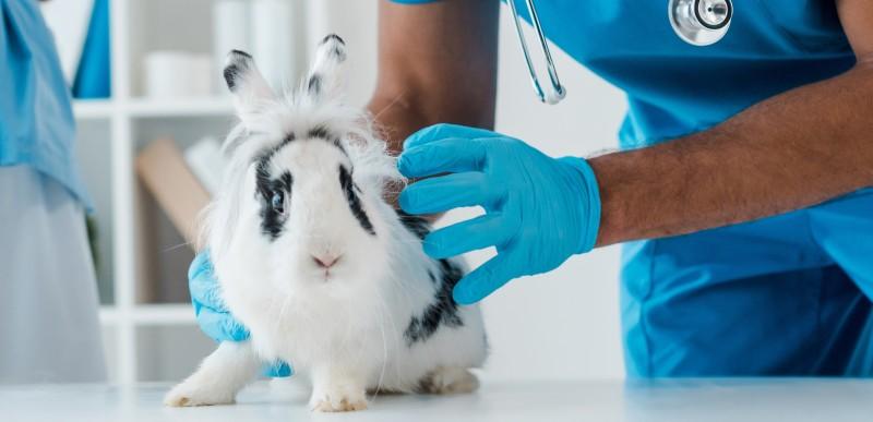 Foto I Conigli possono trasmettere malattie contagiose?