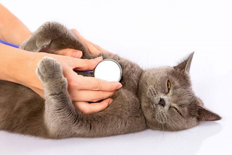 Foto Il mio gatto non respira bene: cosa faccio?
