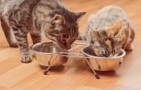 Foto Cos'è la taurina e perché è importante per i Gatti?