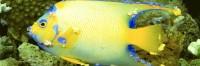 linfocistosi nel pesce