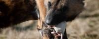 cane mangia topo