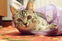 gatto mangia sacchetti di plastica