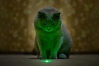 puntatore laser e gatti