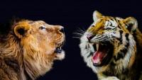 leone vs tigre