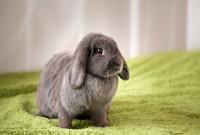 velocità dei conigli