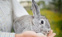 coniglio nano sta per morire