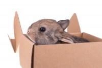 coniglio dentro scatola di cartone