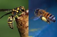 ape vs vespa