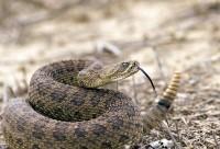 repellente serpenti