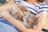 gatto malattie zecche e pulci